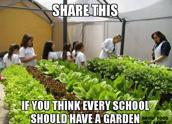 Grow Food Not Lawns - Every School Should Have a Garden