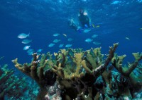 Love to Dive? Love the Environment?