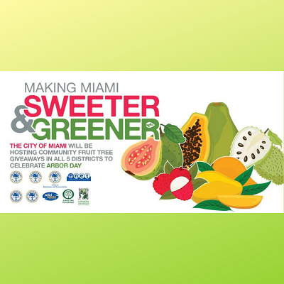 Making Miami Sweeter & Greener – Free Fruit Trees