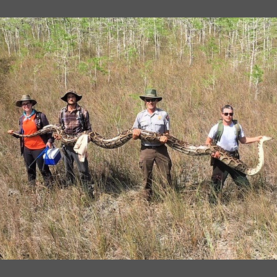 Scientists Capture a Record 17-foot Python in Florida